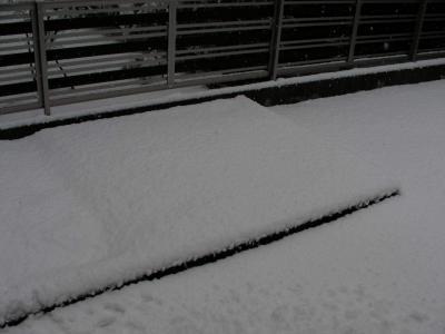 寒地型西洋芝に積もった雪