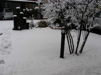 芝生の上に積もった雪