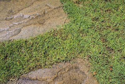 春の立ち上がりで発生した芝生の黄化現象
