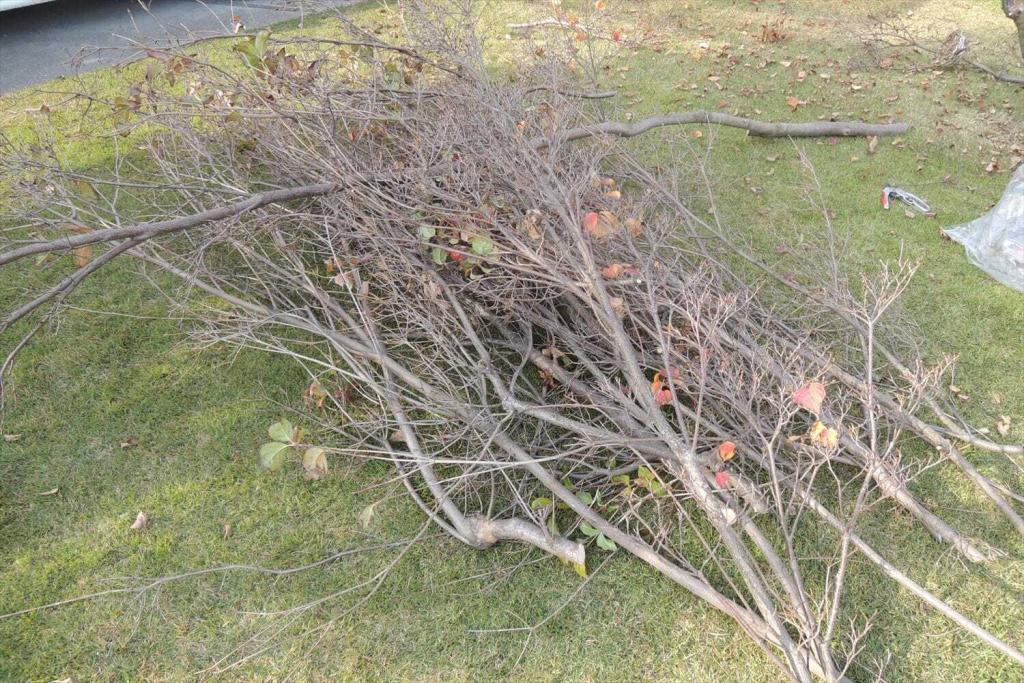 植木の剪定で芝生の木陰を緩和する