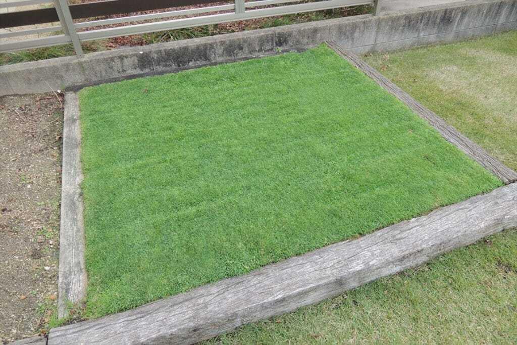 西洋芝の耐寒性向上とはみ出し防止策