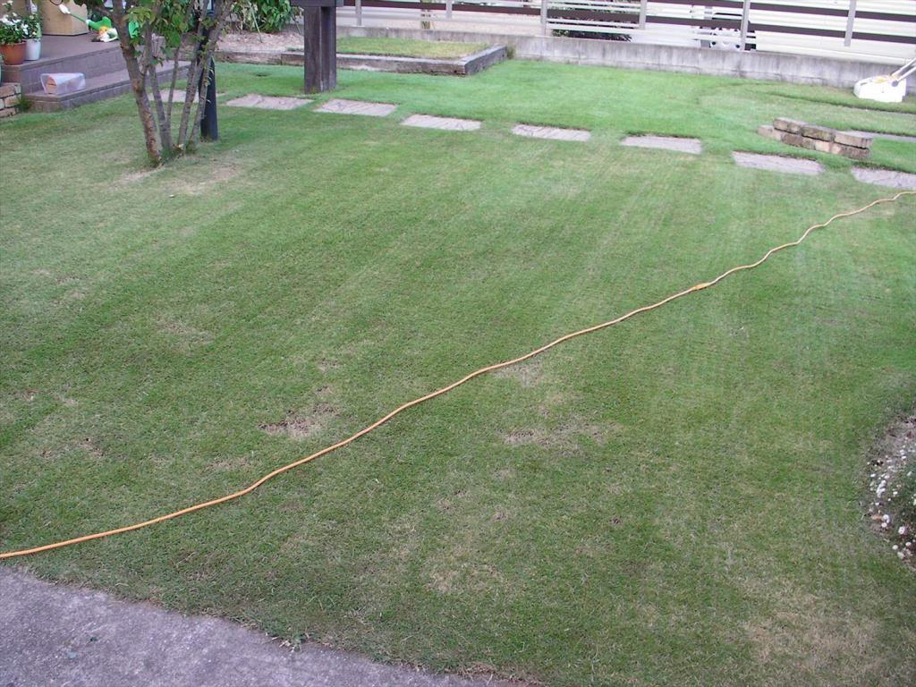 軸刈りで芝刈りをしたら枯れたように見える