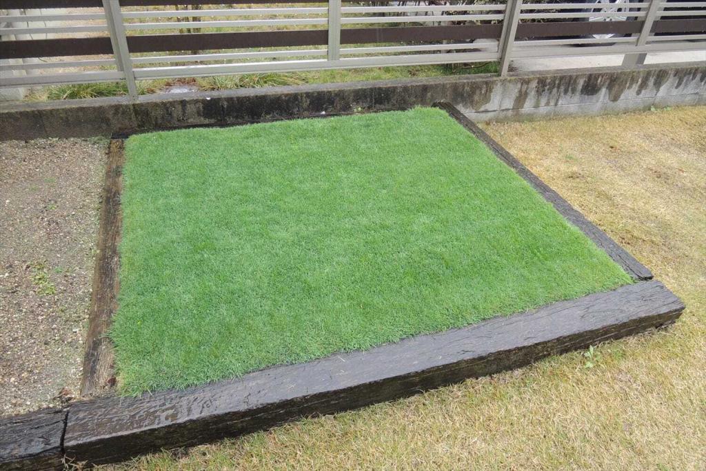 寒地型西洋芝で1年中緑の芝生に