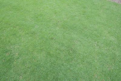 土壌処理剤が効いて雑草が生えない芝生