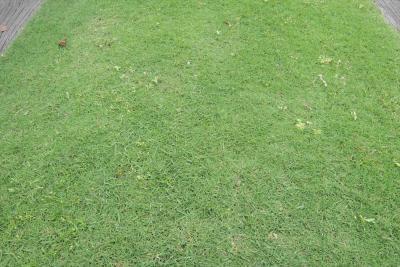 雑草が生えている芝生