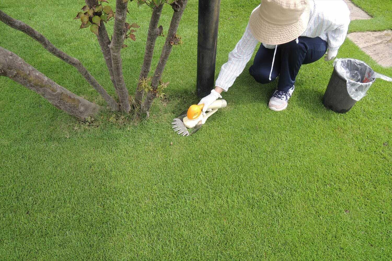 バリカンで芝生の際刈りをする様子
