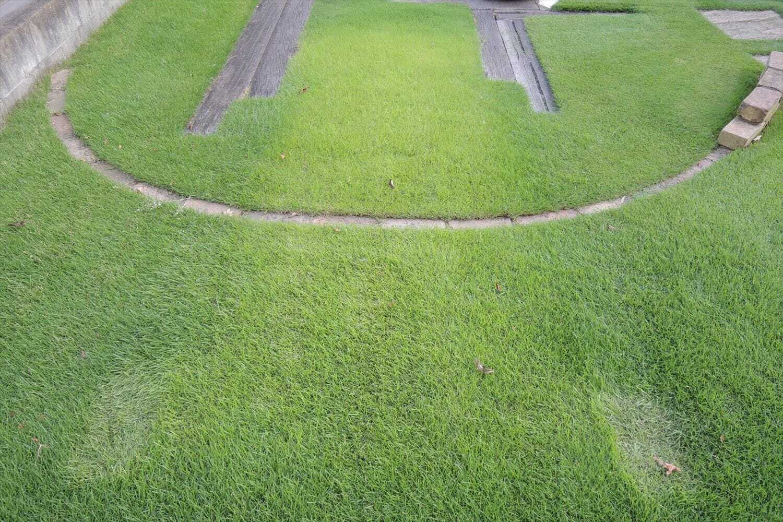 日照不足で黄化した芝生