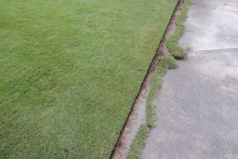 カットされた芝生