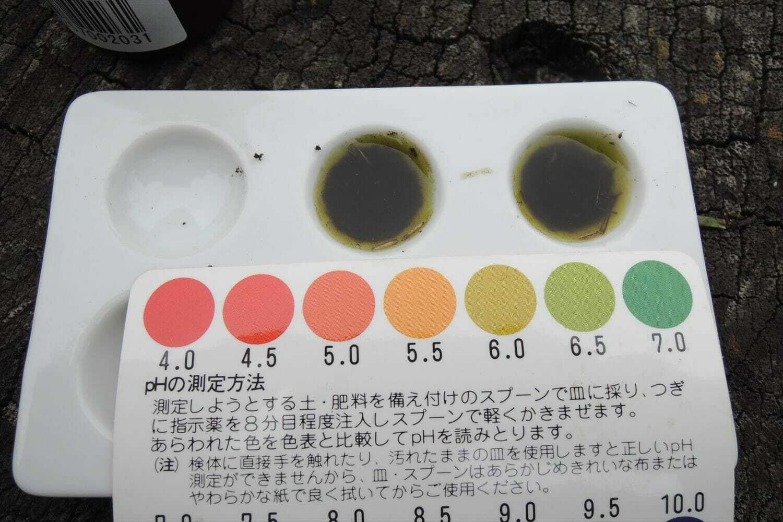 土壌のpH測定とベントグラスの様子