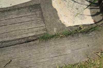 はみ出した芝生