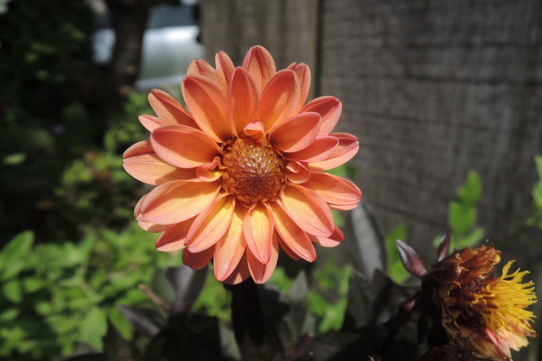 順調に回復する姫高麗芝の様子と農薬使用に関する注意点
