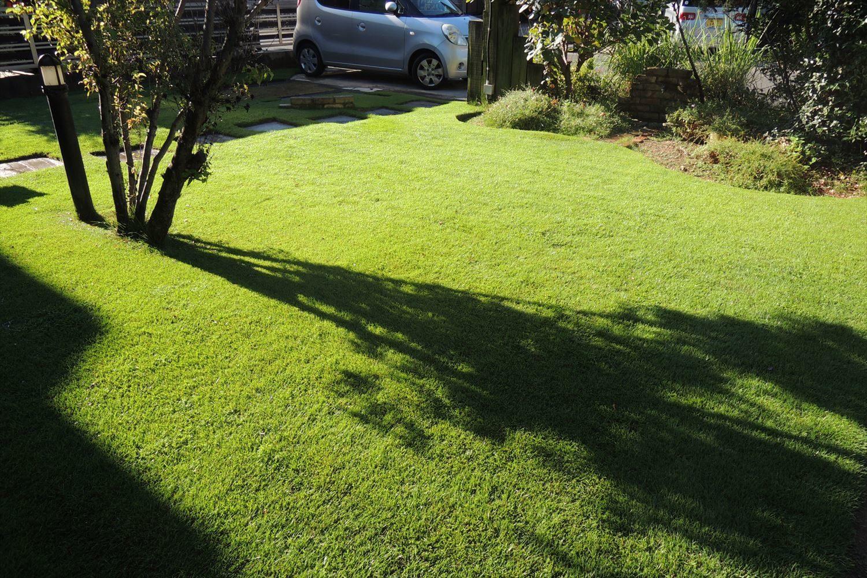 好天続きで芝生の散水が欠かせない夏