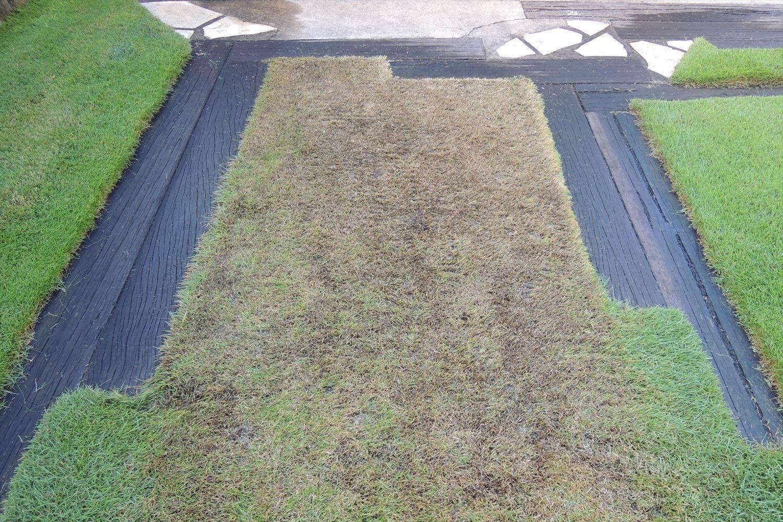 暖地型の芝生ならではの軸刈り解消法